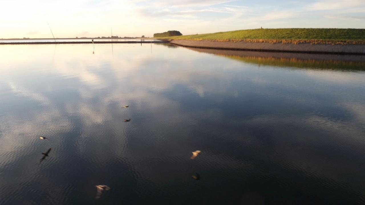 Envol au ras de l'eau